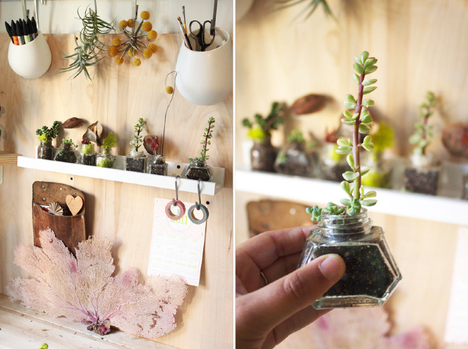 compai-plant-in-tiny-jars19