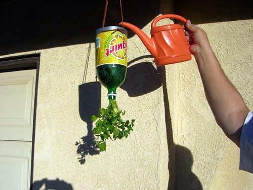 plastic-bottles-upside-down-plants-02