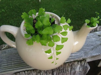 teapot-planter